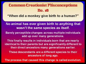 When did a monkey give birth to a human?