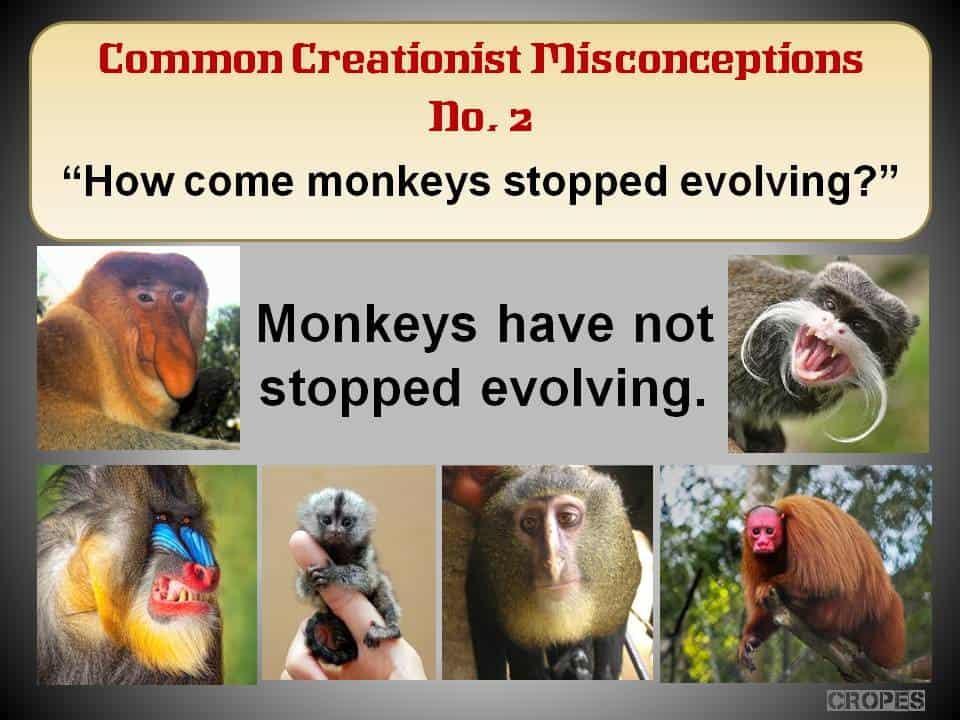 How come monkeys stopped evolving?