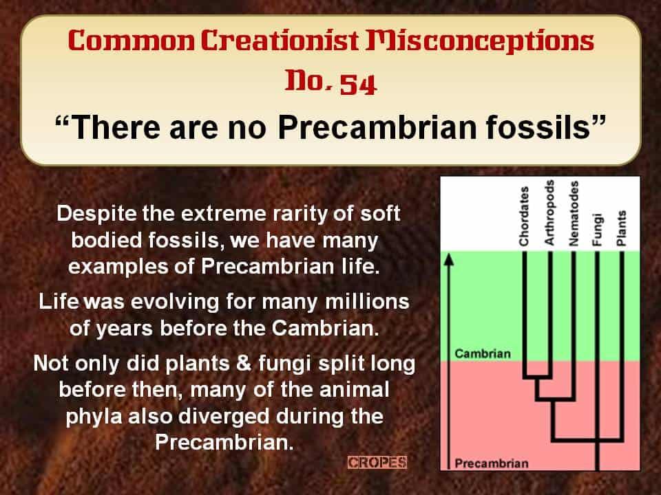 No Precambrian fossils